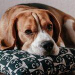 Alternativen zum Hundekörbchen